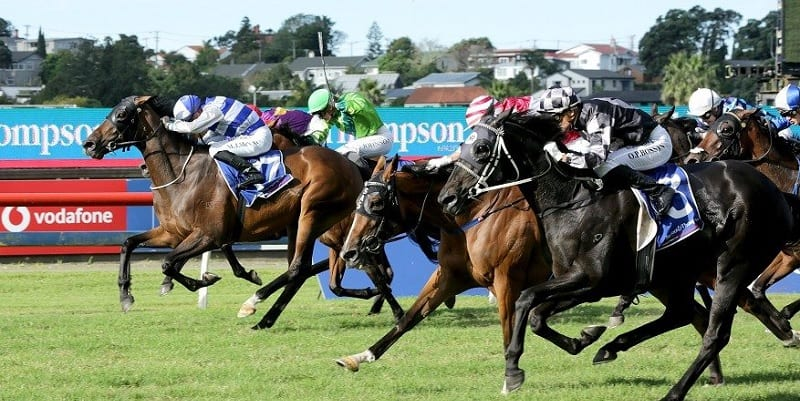 Auckland Cup feature image